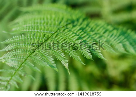 fern leaves, macro leaves, fern leaves background #1419018755