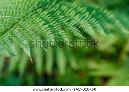 fern leaves, macro leaves, fern leaves background #1419018758