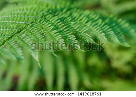 fern leaves, macro leaves, fern leaves background #1419018761