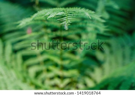 fern leaves, macro leaves, fern leaves background #1419018764