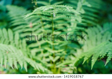 fern leaves, macro leaves, fern leaves background #1419018767