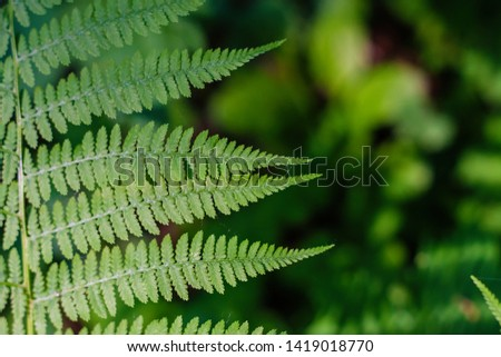 fern leaves, macro leaves, fern leaves background #1419018770