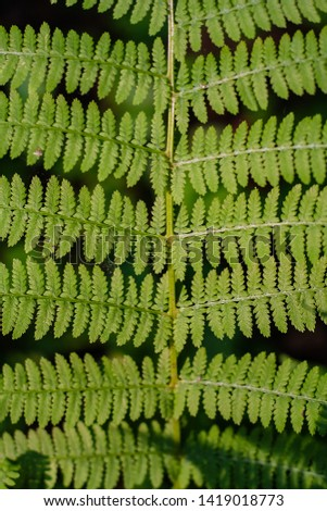 fern leaves, macro leaves, fern leaves background #1419018773