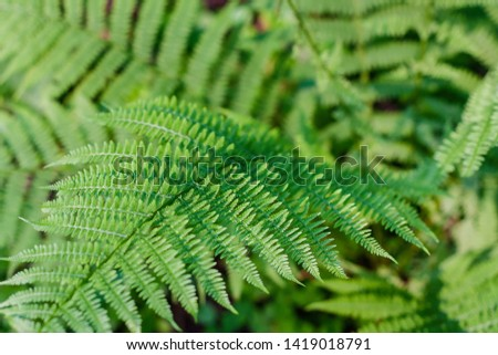 fern leaves, macro leaves, fern leaves background #1419018791