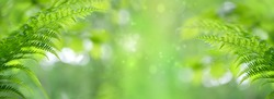 Fern leaves on abstract green natural background. pure wild nature, environment, ecology concept. summer forest landscape. copy space. banner