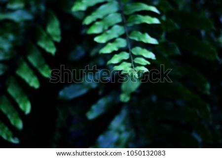 Fern leaves tropical green plants in rainforest background. #1050132083