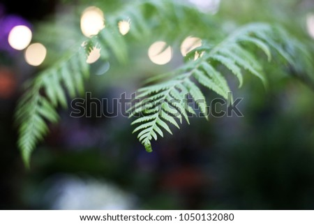 Fern leaves tropical green plants in with boken light background. #1050132080