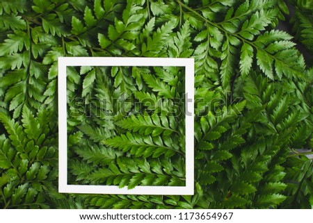 Fern leaves with white square copy space background. #1173654967