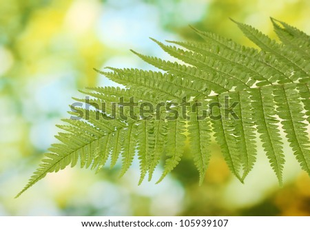 Fern on green background close-up