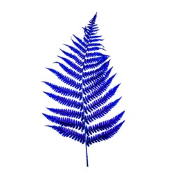 FERN. Persian blue is a shade of blue. It is named for the blue color of carpets, ceramics and the color of the tiles used in the decoration of palaces. Natural luxury.