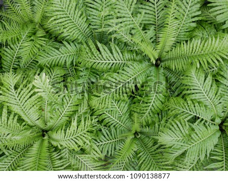 Fern plant for background #1090138877
