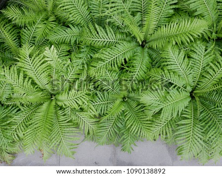 Fern plant for background #1090138892