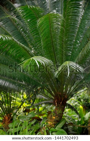 Fern plant in the tropical rainforest