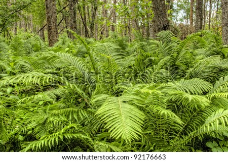 Fern plants cover the ground of the natural forest