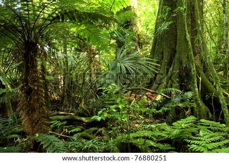 Fern tree in tropical jungle rain forest #76880251