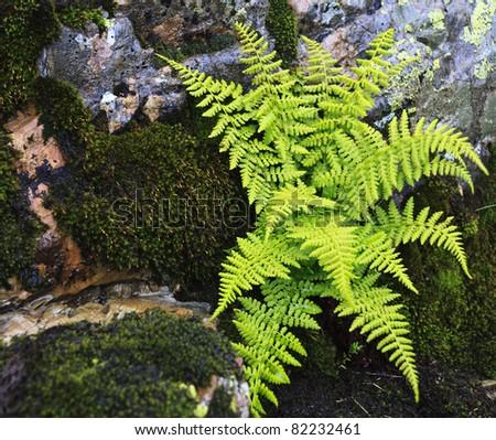 Ferns growing on a rocky ledge