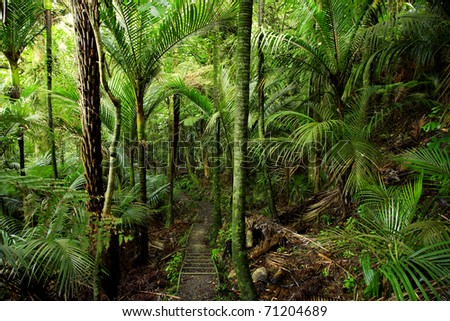 Ferns in lush tropical forest