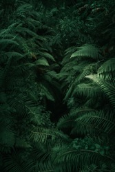Ferns in the forest, Bali. Beautiful ferns leaves green foliage. Close up of beautiful growing ferns in the forest. Natural floral fern background in sunlight.