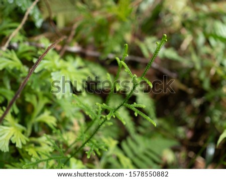 Ferns leaves green foliage natural floral fern background. Wild fern in rainforest jungle of Thailand. #1578550882