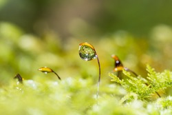 Ferns or mosses with dew drops in the forest
