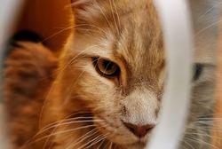 Ferocious looks of cat from animal market