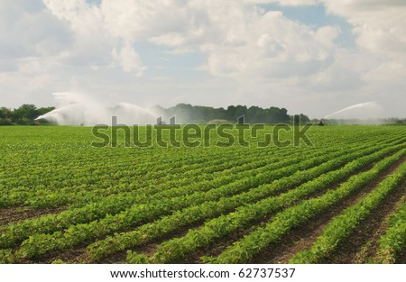 Fertile Field Irrigated