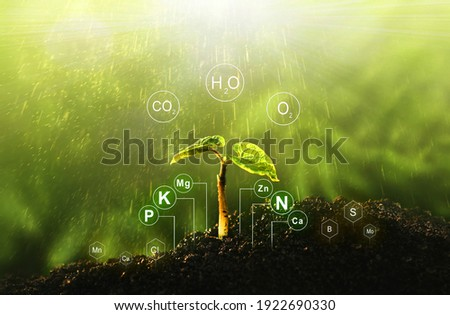 Fertilization and the role of nutrients in plant life with digital mineral nutrients. Seedlings are exuberant from abundant loamy soils.  Сток-фото ©