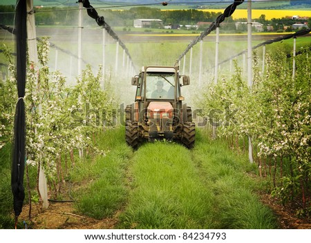 Fertilizer in fruit orchard,  agriculture farm.