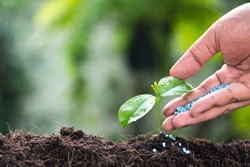 fertilizer,soil,Farmer hand giving chemical fertilizer to young plant,hand of a farmer giving fertilizer to young green plants / nurturing baby plant with chemical fertilizer