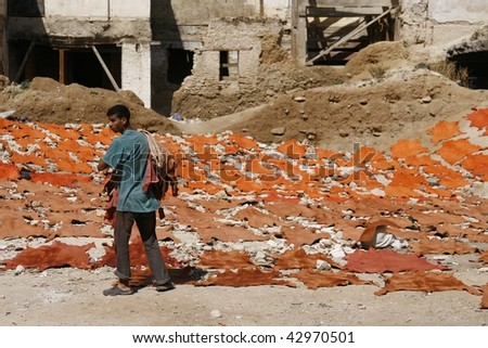 FES, MOROCCO - JUNE 4: Man laying out raw freshly colored animal skins for drying in the sun on June 4, 2008 in Fes, Morocco. The tanneries in Fes are known worldwide for their excellent quality.