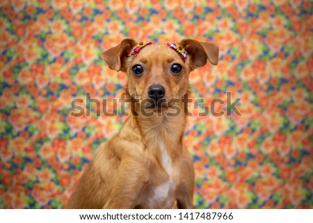 Festa Junina: party in Brazil in the month of june. Dog in a party background #1417487966