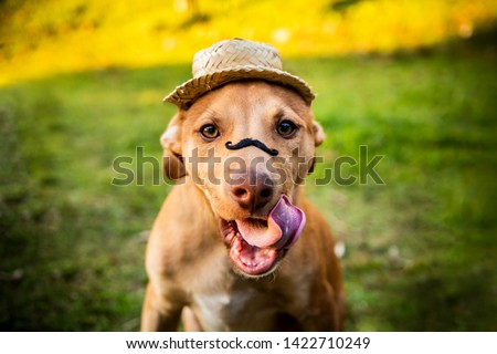 Festa junina: party in Brazil in the month of june. Dogs wearing costume. Hat and mustache. Country, hick culture.