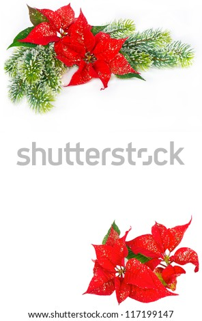 Festive background with christmas flowers red Poinsettia and evergreen tree decoration