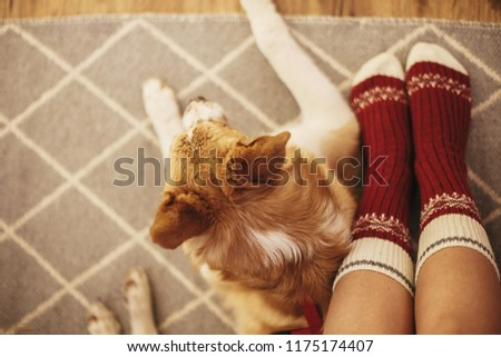 festive socks on girl legs and cute golden dog sitting on floor in festive room. relax time. cozy winter holidays. warm atmospheric moment. christmas holidays
