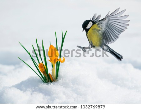 festive spring card with a tit...