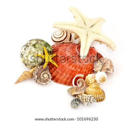 Few colorful seashells in a still life theme, isolated on white.