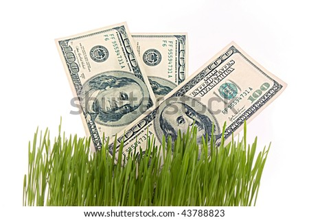 Few dollars in green grass isolated on white