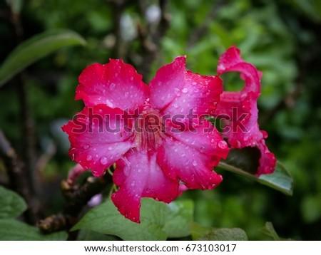 Fflower red #673103017