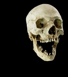 Fiberglass human skull with mouth wide open facing at a 45 degree angle
