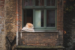 Fidel was a popular dog along the Gronerei Canal who often rested his head out the window for tourists to photograph in Bruges, Belgium