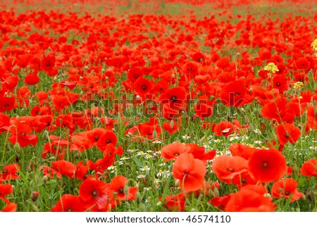 Fiel with poppies, germany