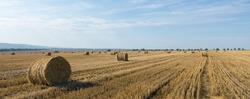 Field after harvest in the morning. Large bales of hay in a wheat field.