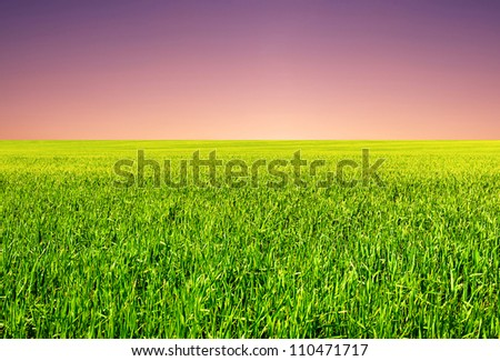 Field and bright sky. Natural composition
