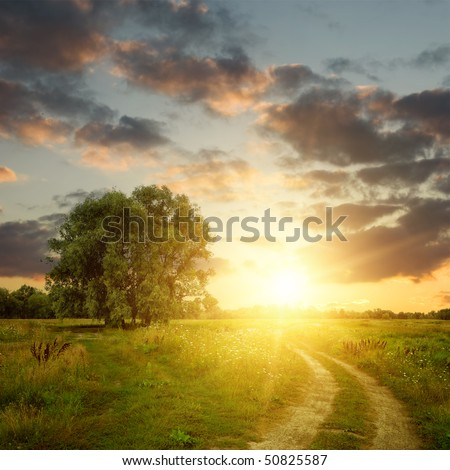 Field and dirt road to sunset. Summer landscape