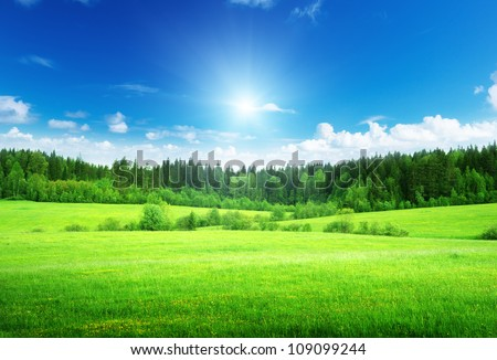 field and forest in spring time