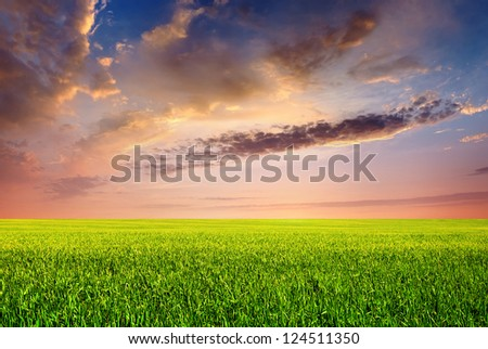 Field and large sky with clouds during sunrise. Natural summer landscape
