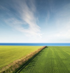 Field and sea as a background. Agricultural landscape from air