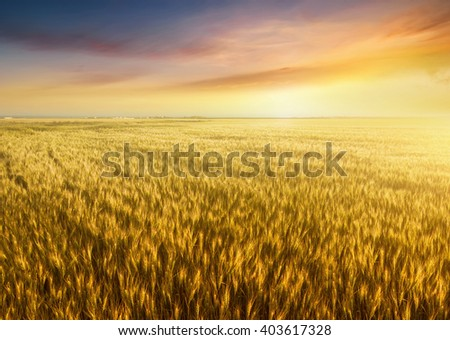 Field and sky. Beautiful natural landscape #403617328