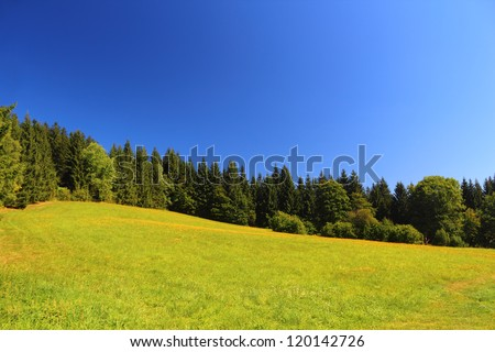 Field and trees with perfect clear blue sky