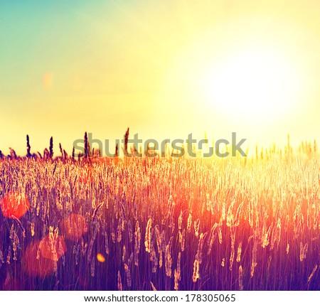 Field. Beautiful Nature Sunset Landscape. Sun. Rural Landscape under Shining Sunlight